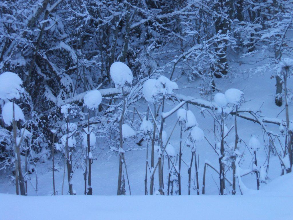 La neige, image de la chasteté...